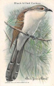 TC82 Arm & Hammer Black-Billed Cuckoo Bird Series Baking Soda Vintage Trade Card