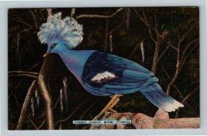 Miami FL, Parrot Jungle, Goura Goura, Florida Linen Postcard