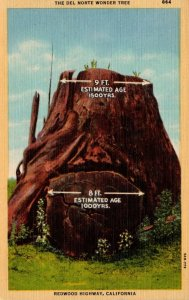 California Redwood Highway The Del Norte Wonder Tree