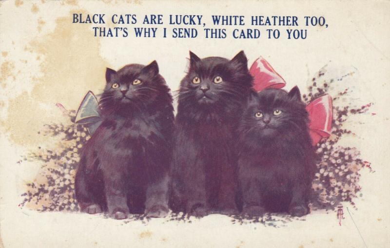 Three Black Kittens wearing bows, 1900-10s