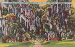 Avenue Of Live Oaks Brookgreen Gardens Along South Carolina's Famous Coast Ch...