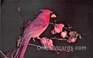 Ithaca, NY, USA Cardinal Unused