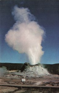 Postcard Castle Geyser Yellowstone Natl Prk Performing 16hrs At A Time VPC0.