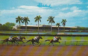 Horse Racing Hialeah Race Course Miami Florida