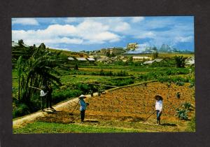 Vietnam Gardens Da Lat South Viet Nam Postcard Asian Asia Viet-Nam