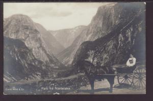 Woman,Horse Cart Postcard