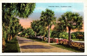 Florida Scene Along Tamiami Trail
