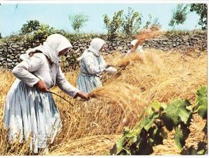 Greece, Reaping the wheat, used Postcard mailed from the UK