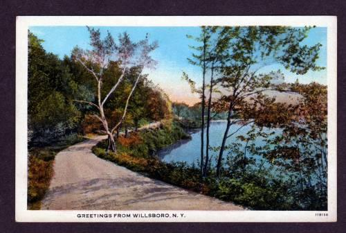 NY Greetings from WILLSBORO NEW YORK PC Postcard