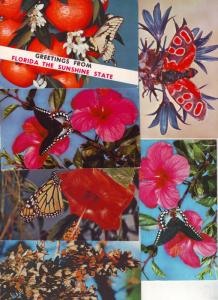 P194 JLs 6 postcard 3 1/2 x 5 1/2 butterfly excellent cond.
