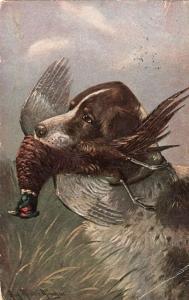 Art Muller Gordon dog hunting Fazent original old Postcard 01.49