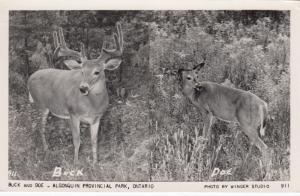 RP: ALGONQUIN PARK , Ontario , Canada , 1957 ; Buck & Doe Deer