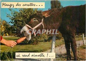 Postcard Modern Eating carrots makes ca lovable Donkey Mule
