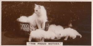 The Proud Cat Mother German Old Real Photo Kittens Drinking Cigarette Card