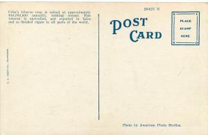 Vintage 1915-1930 Printed Postcard Growing Tobacco in Cuba Unposted