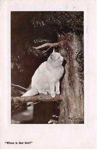 Where is that Bird Cat 1908