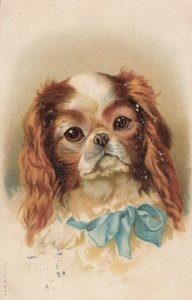 Dog Portrait , 1907