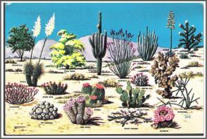 Arizona Cacti & Desert Flora Postcard