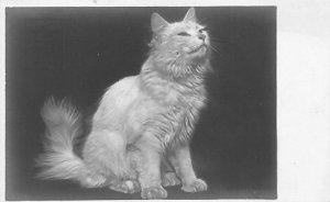 Cat Post Card, Cats Postcards Unused