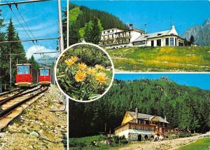 Slovakia Vysoke Tatry - High Tatras - Stary Smokovec, railroad, railway, flowers