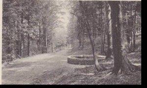 New York Utica Roscoe Conkling Park South Woods Albertype