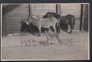 Animals Postcard - Donkeys and a Dog    DC2057