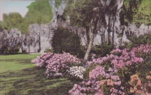 South Carolina Charleston Azalea Gardens Yeamans Hall Club Albertype Handcolored