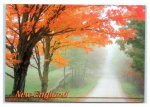 Postcard Fog & Mist add to New England Autumn Colors ME VT NH NES22A K3