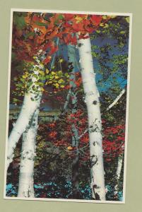 White Mountains New Hampshire Postcard Sugar Maple Birch Trees