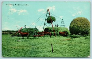 Roundup Montana~Farmers Stacking Western Alfalfa~Hay Mound~Horse Pulley Rig~1912