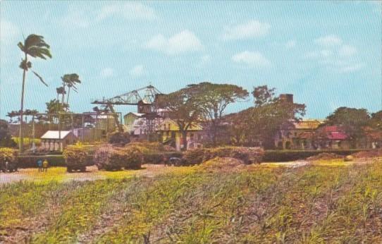 Barbados Typical Sugar Factory