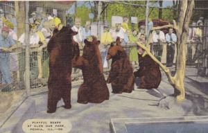 Playful Bears At Glen Oak Park, Peoria, Illinois, 1930-1940s