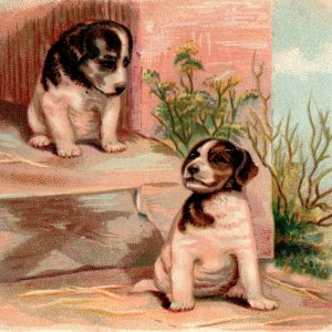 1880's Two Cute Puppy Dogs Arbuckles Ariosa Coffee Victorian Trade Card