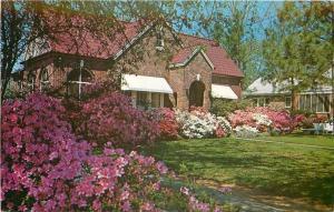 Selma Alabama~Mrs. Michael Katsarakis' Azealeas~2205 Broad Street~1960s Postcard