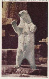 Polar Bear, Chicago Zoo , Illinois , 50-60s
