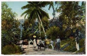 Bog Walk, near Kent Village, Jamaica