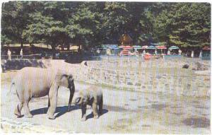 Elephants in Bronx Zoo New York City, NY, Chrome