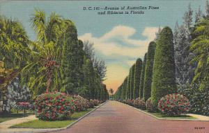 Avenue Of Australian Pines And Hibiscus In Florida Curteich