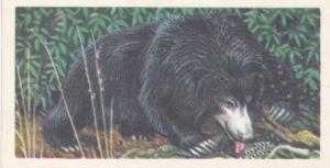 Trade Card Brooke Bond Tea Asian Wild Life No 22 Sloth Bear