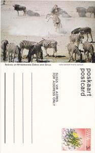 Zebra and Gnus,  Namibia, South West Africa, 40-60s