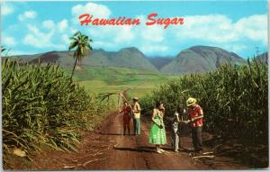 postcard Hawaii HI - tourists in Sugar fields