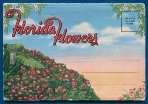 Florida Flowers fl Poinciana Flame vine Zinnias Cannas azaleas postcard folder