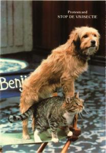 CPM Cat & little dog. CHIEN (717256)