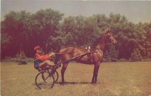 Harness Horse Saratoga Springs New York 1940s Postcard Roberts 4733