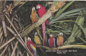 Florida Miami Macaws At Parrot Jungle 1954 Curteich