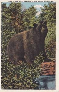 Bear, One of the first settlers of the Whith Mountains,  New Hampshire,   00-10s