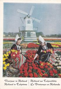 Women in Traditional Costumes Picking Tulips Near Windmill, Holland 1959
