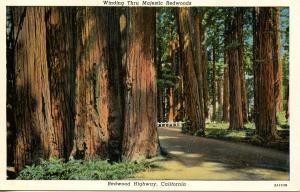 CA - Redwood Highway