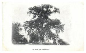Early 1900s Old Indian Elm at Maumee, OH Postcard *5N22
