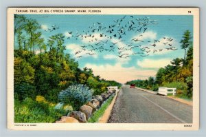 Miami FL-Florida, Tamiami Trail at Big Cypress Swamp,Birds, Linen c1938 Postcard